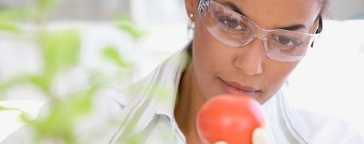 Scientist analysing a tomato in a laboratory