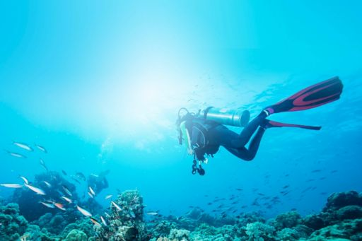 Scuba divers with fish
