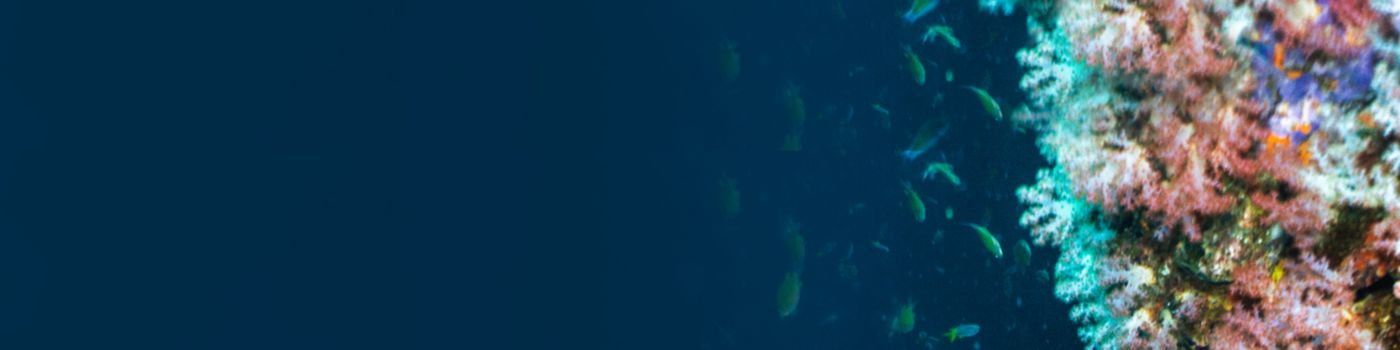 Aerial view view of coral reef and fish