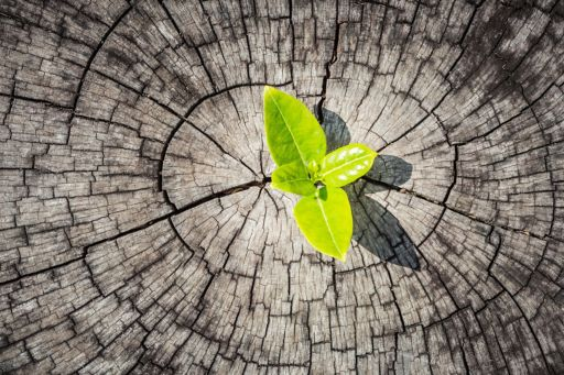 small plant growing from tree trunk as a symbol for the cost of capital study 2020