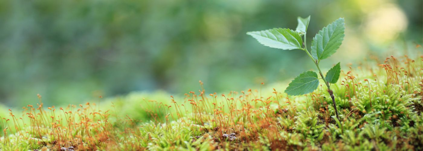 Environmental, social, governance (ESG) and sustainability: KPMG Services