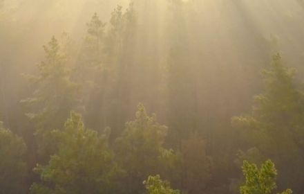Sunlight on forest
