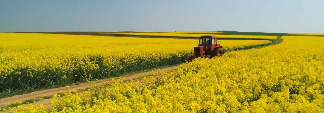 Tractor in a yellow farm