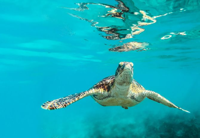 Turtle swimming under-water