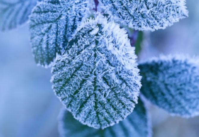 leaves with snow