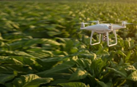 White drone flying over green plants
